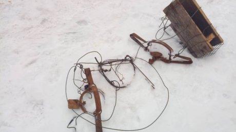В Шемышейском районе охотоведы спасли попавшую в сеть косулю